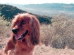Happy Tails on Happy Trails 04